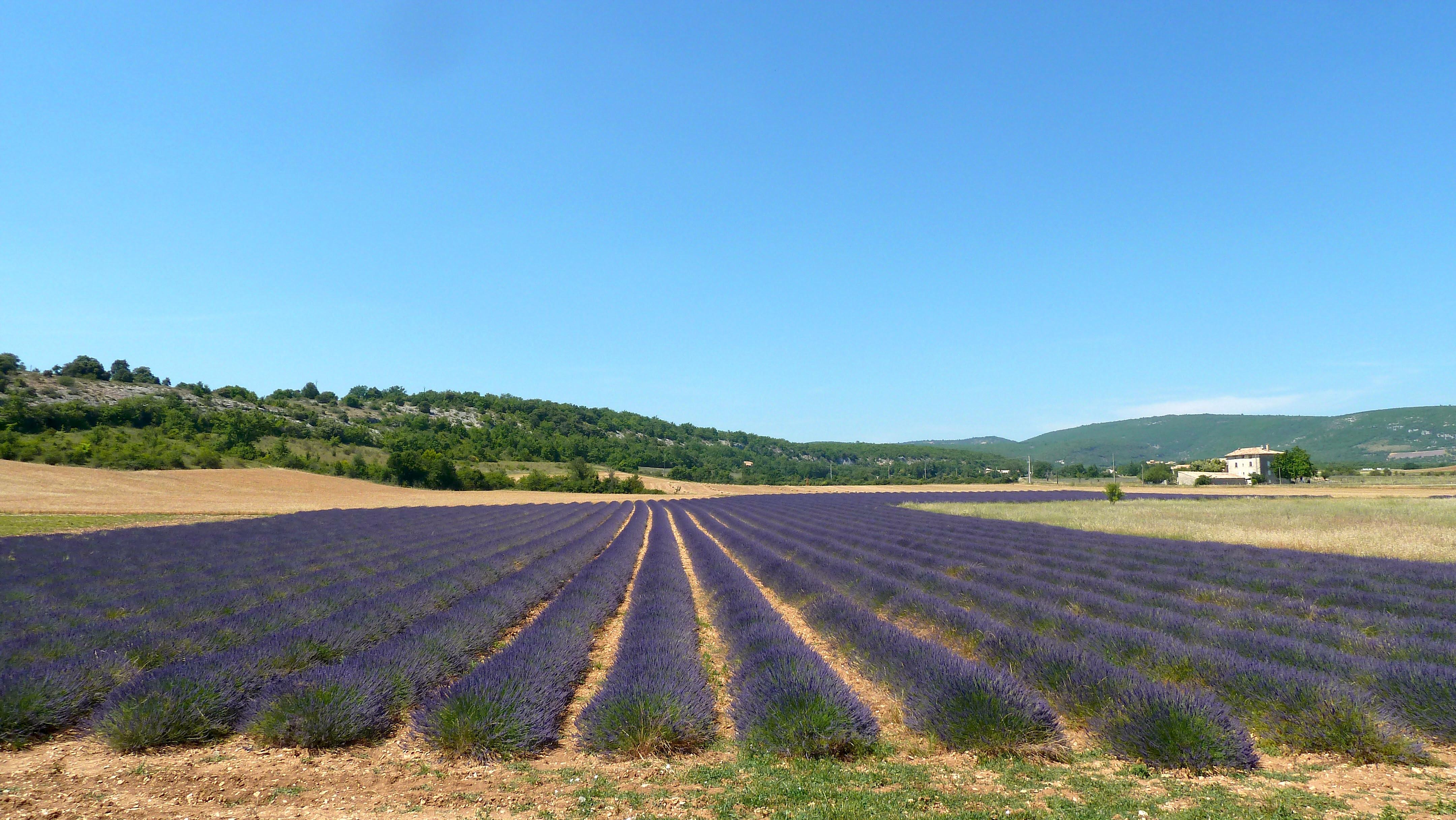 La gastronomie de Provence