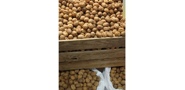 La noix, un atout santé de choc, à intégrer régulièrement à toute alimentation !